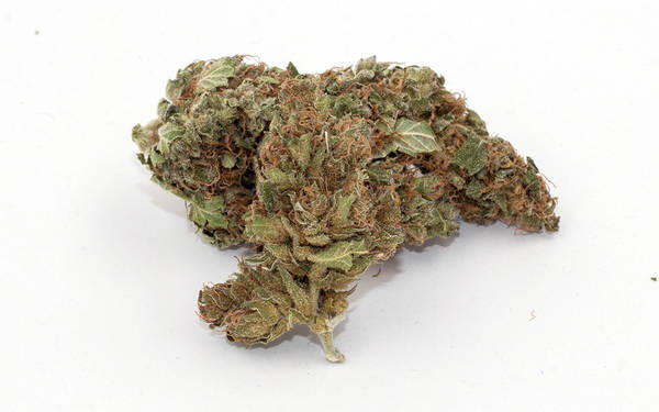 Bulk CBD Flower For Sale